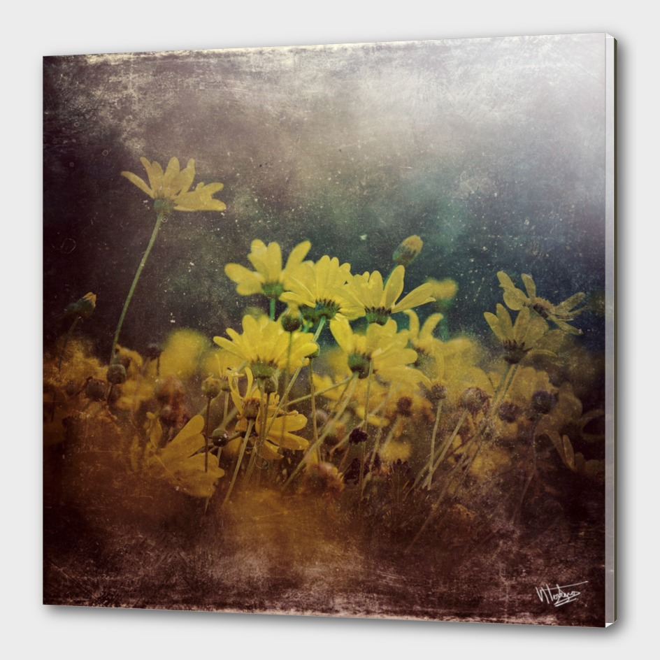 Abstract Yellow daisies