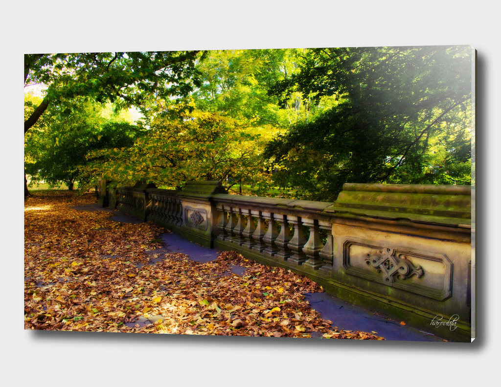 Fall in Central Park ii