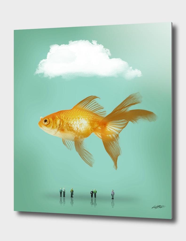 balloon fish