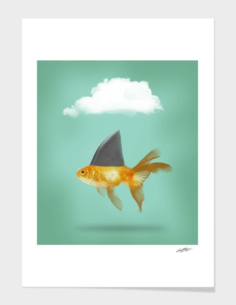 Shark fine Goldfish