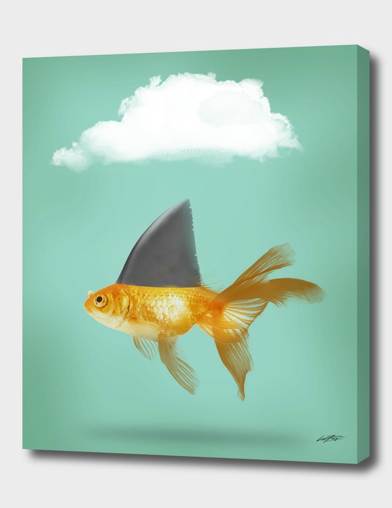 Shark fine Goldfish