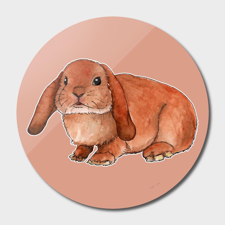 Red rabbit ram