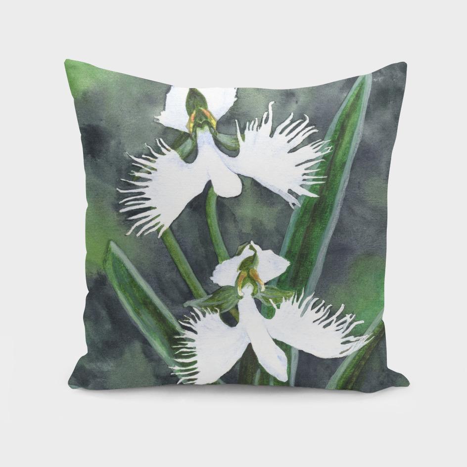 White egret orchids flowers (Habenaria radiata)