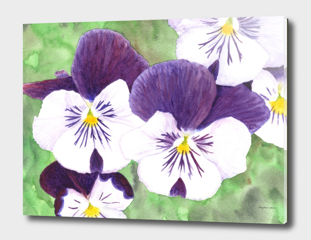 Purple and white pansies flowers