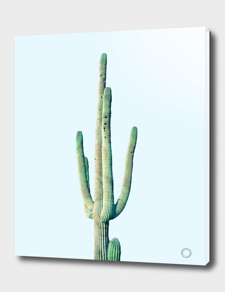 Loner Cactus