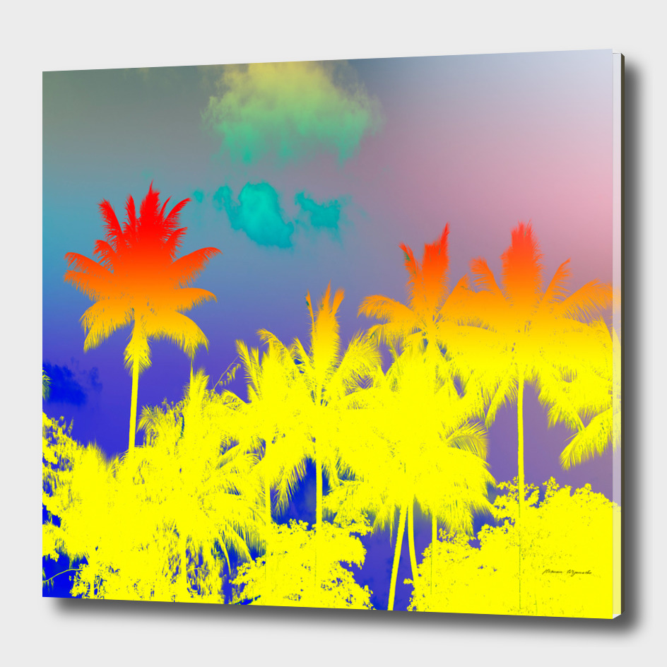 tropical cool coconut tree