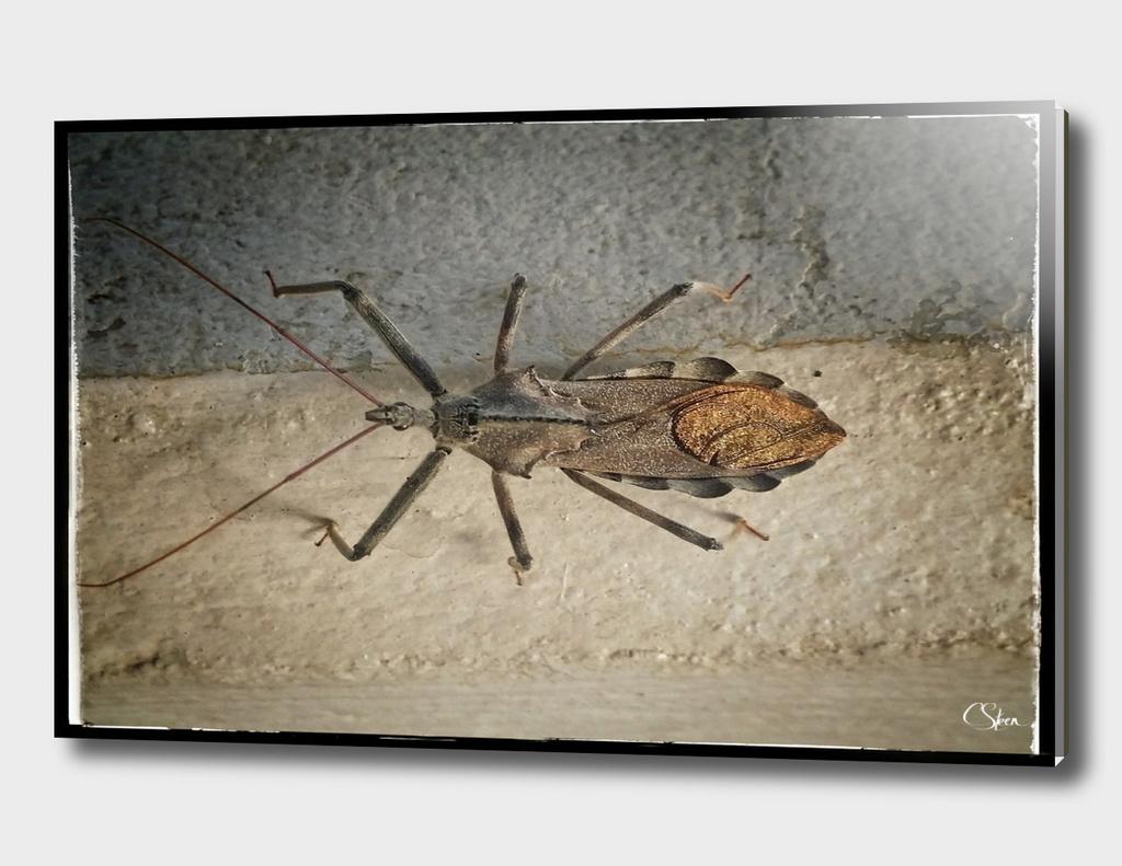 Bug DPSS170520a