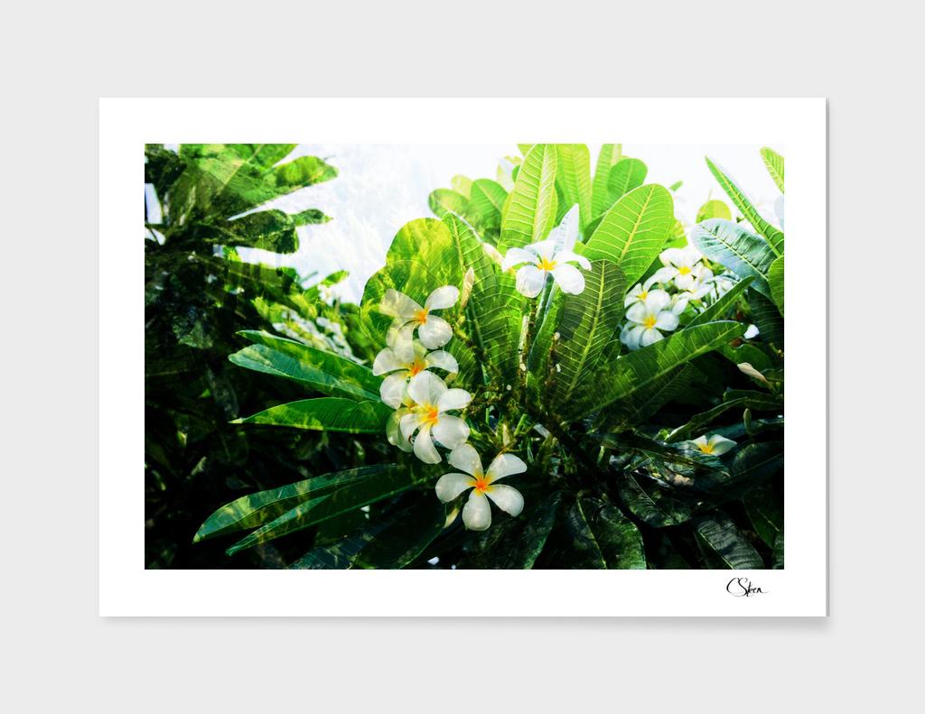 Remembering Tonga DPSS015224a