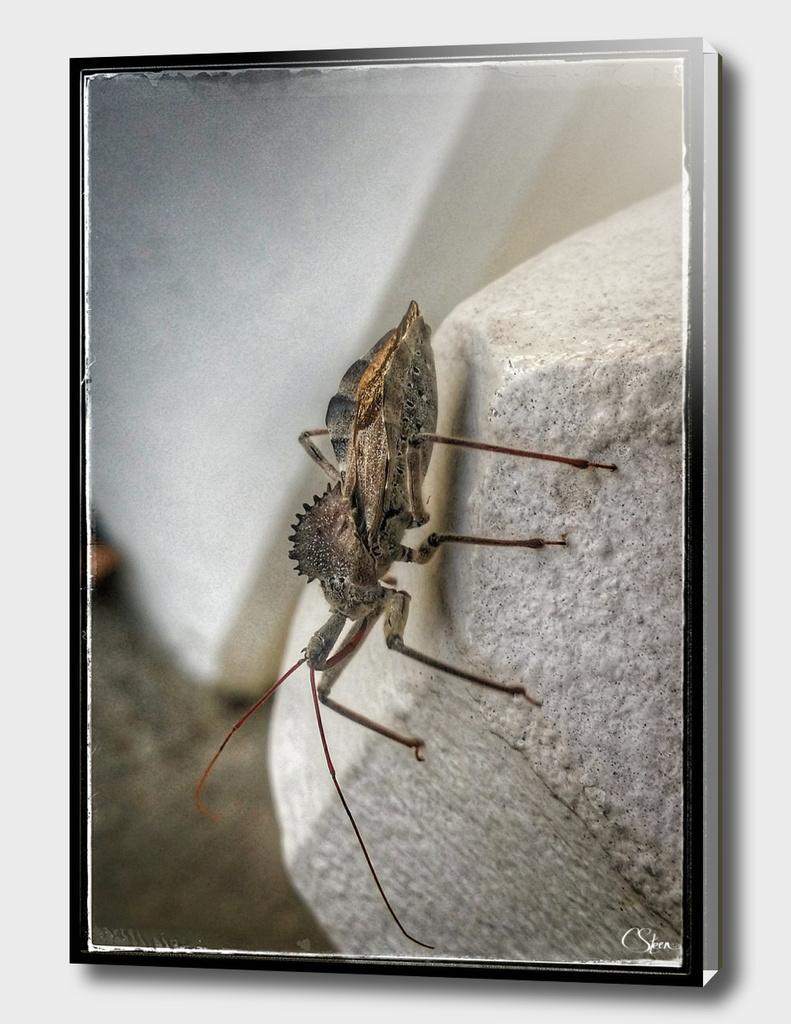 Bug DPSS170520b
