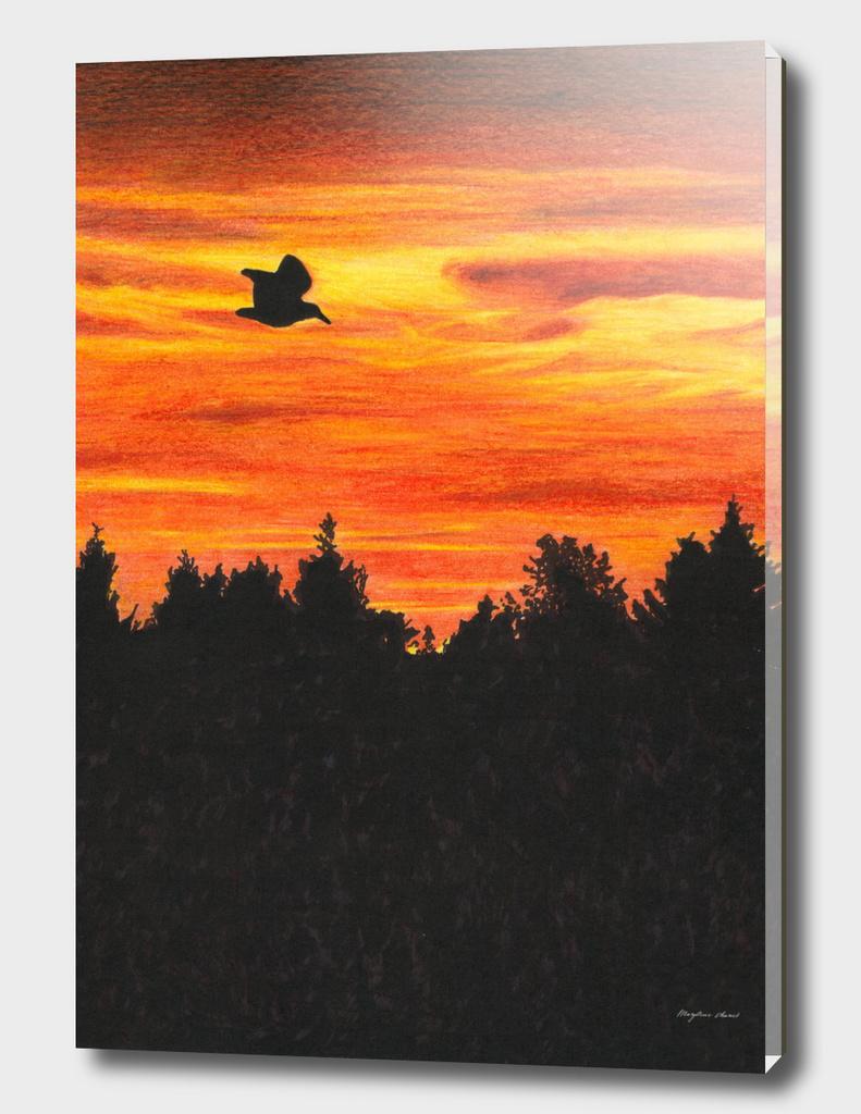 Sunset with a bird