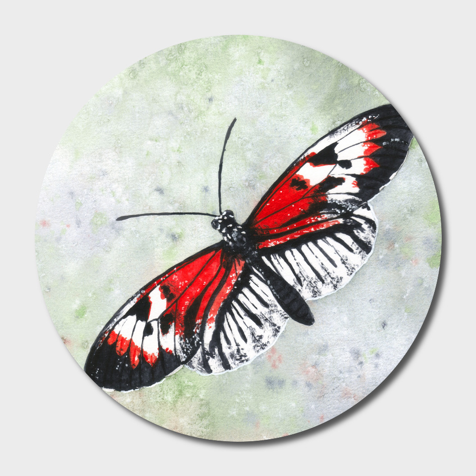 Piano key butterfly (Heliconius melpomene)