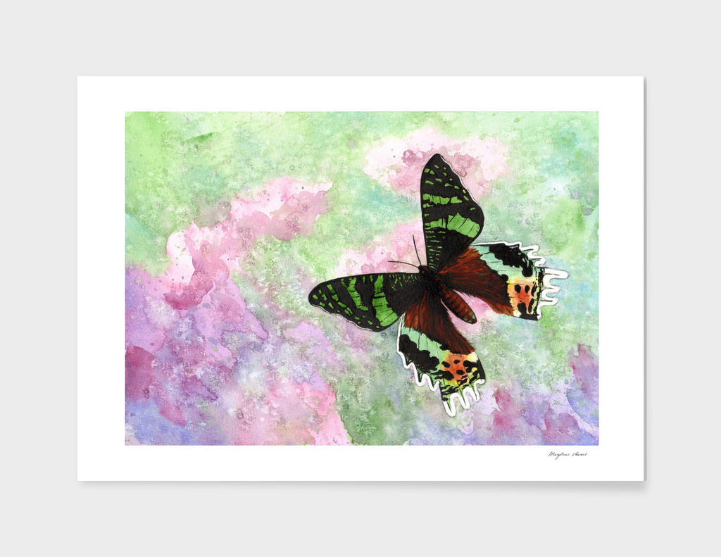 Urania Ripheus Butterfly