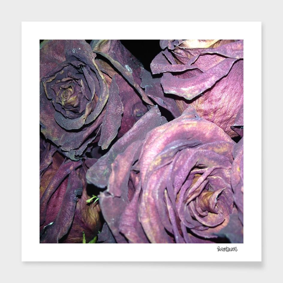 Rotting Roses