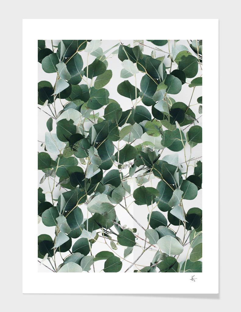 plant dynamic pattern