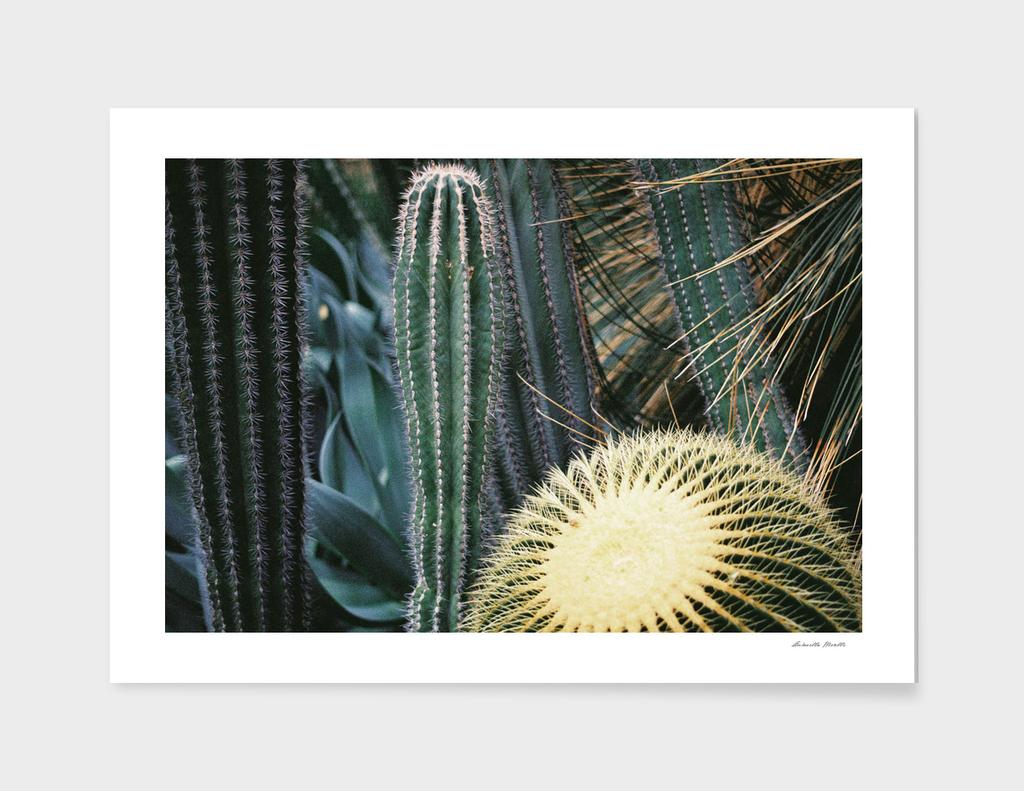 Cactus_Botanics