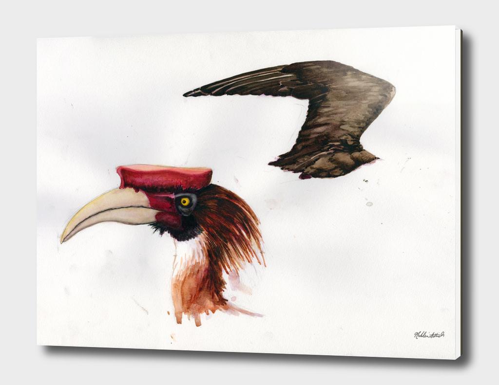 Hornbill Head and Jaeger Wing