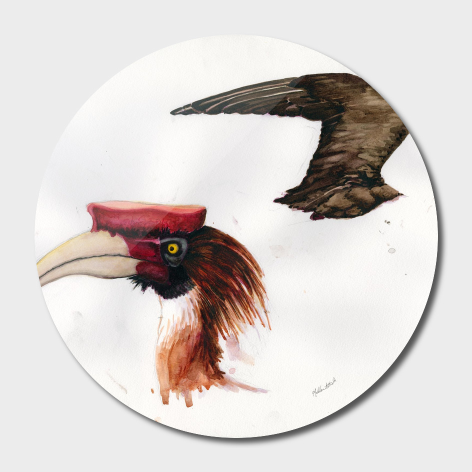 Hornbill Head and Jaeger Wing