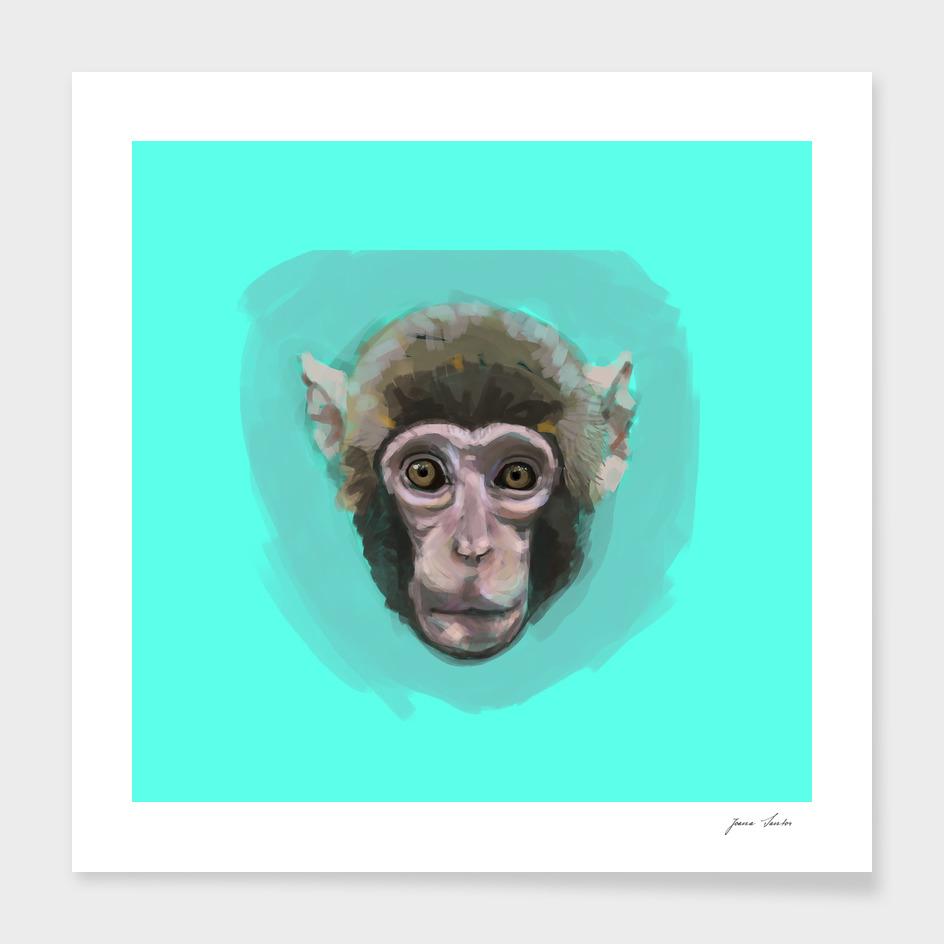 monkey in blue