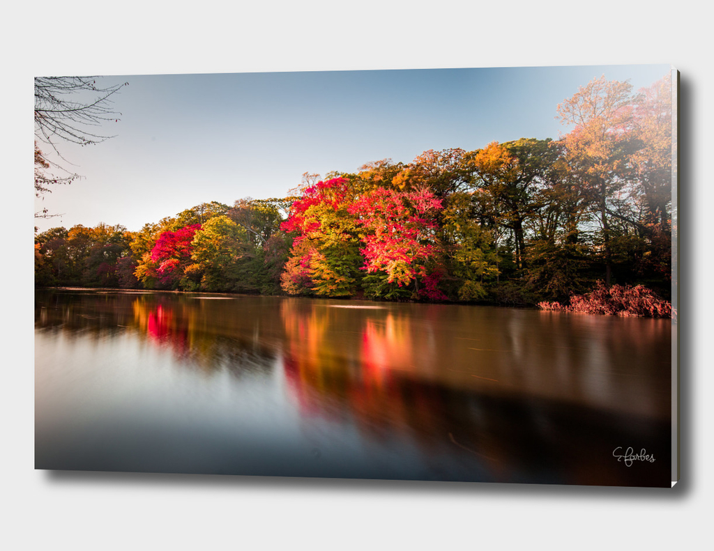Brilliant Colors of Fall