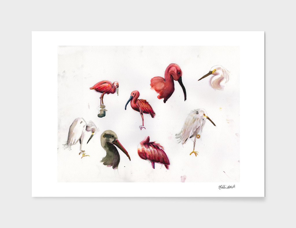 Snowy Egret and Assorted Ibises