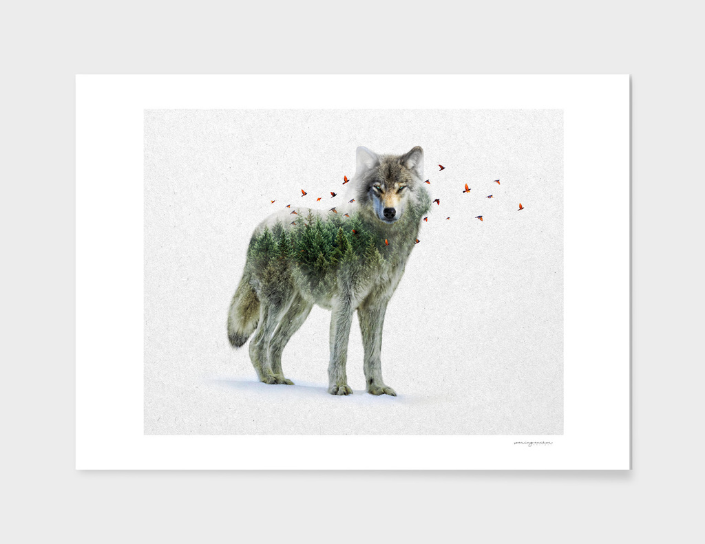 Wild I Shall Stay   Wolf