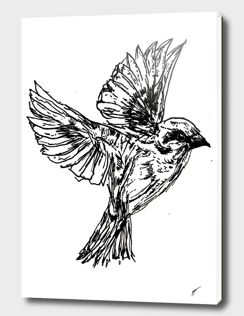 Sketch 44 - Bird