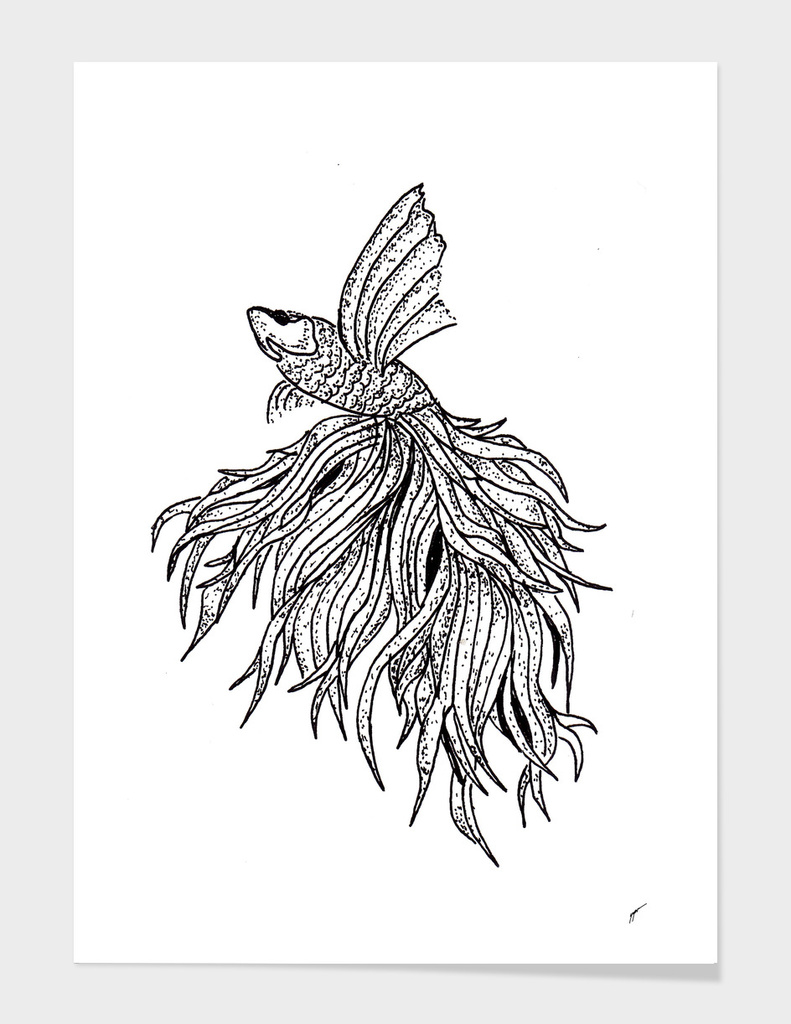Sketch 55 - Betta Fish