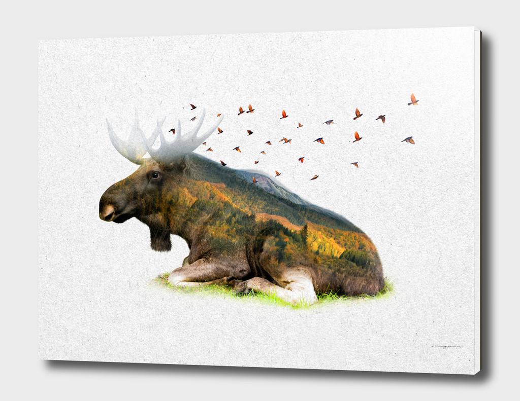 Wild I Shall Stay | Moose