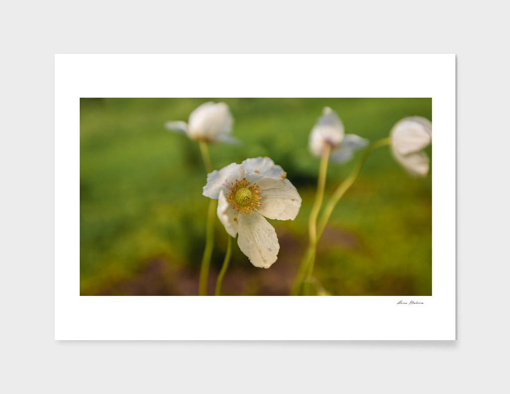 Florals minimalism