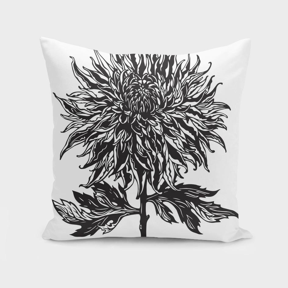 Сhrysanthemum