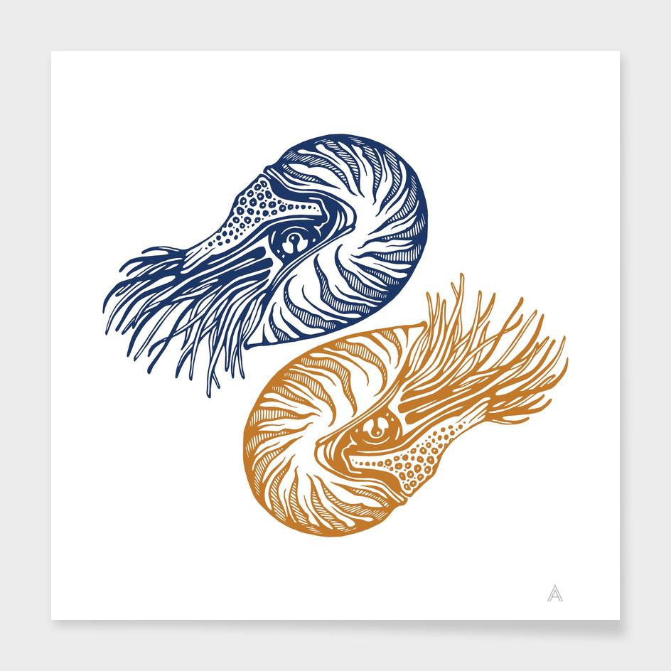 Nautilus (blue/yellow)