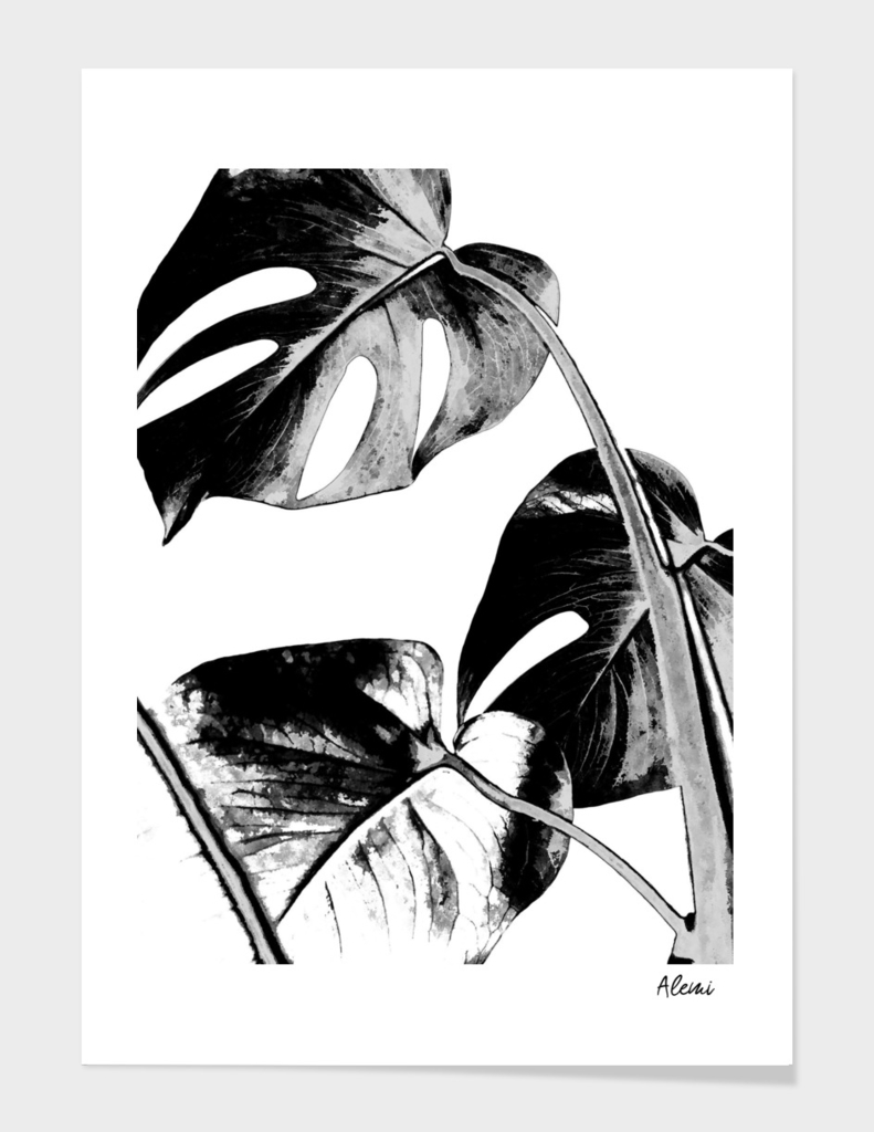 Black Monstera Leaves