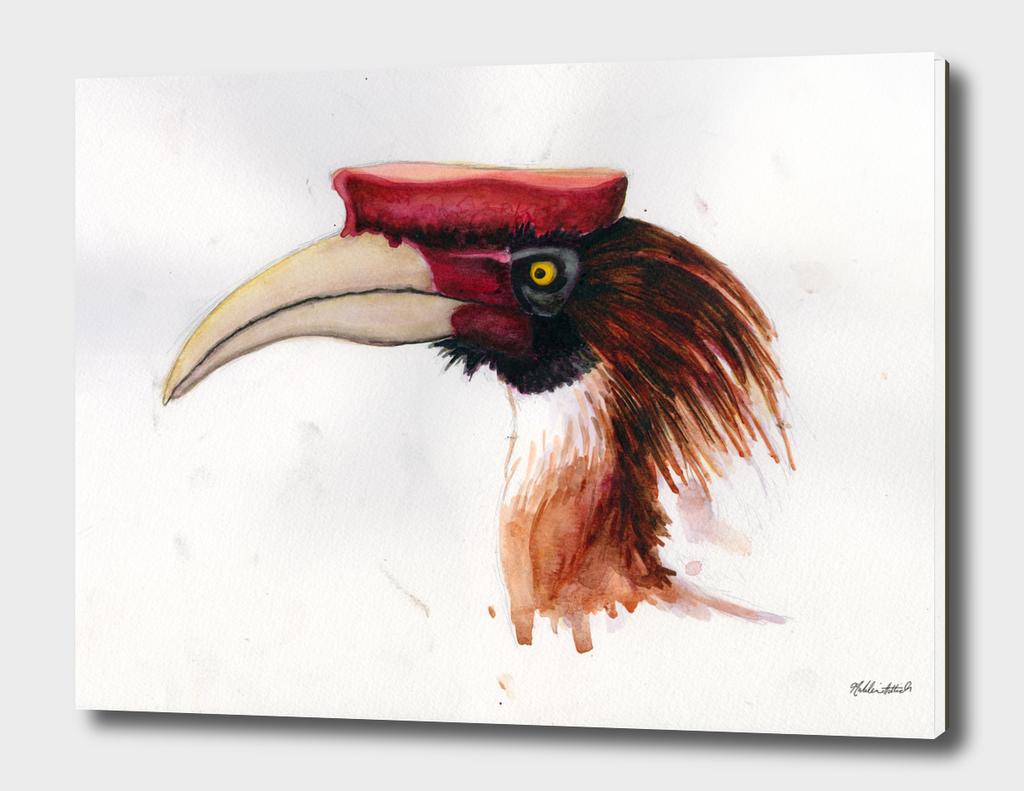 Hornbill Head