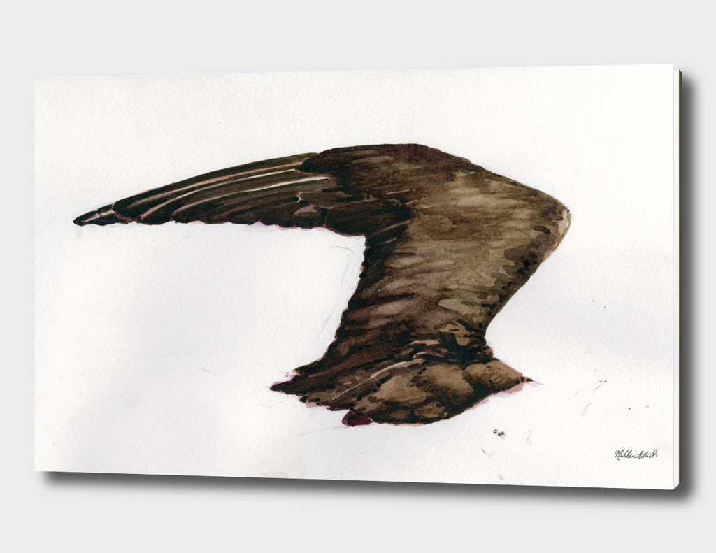 Jaeger Wing