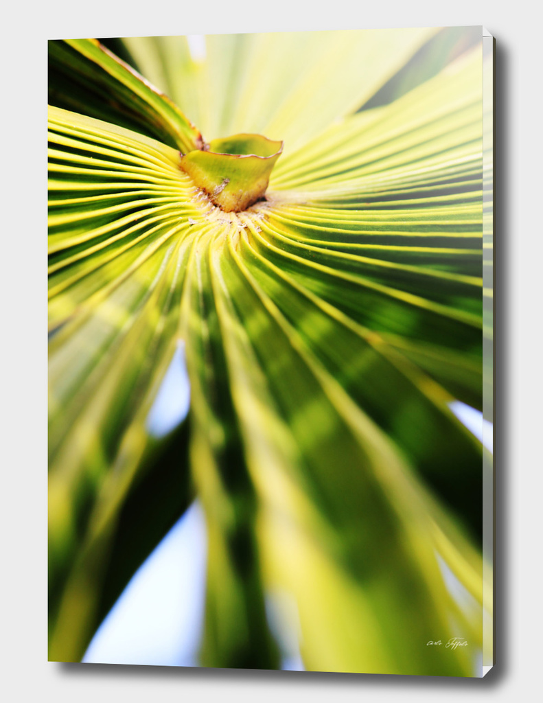 Palm leave
