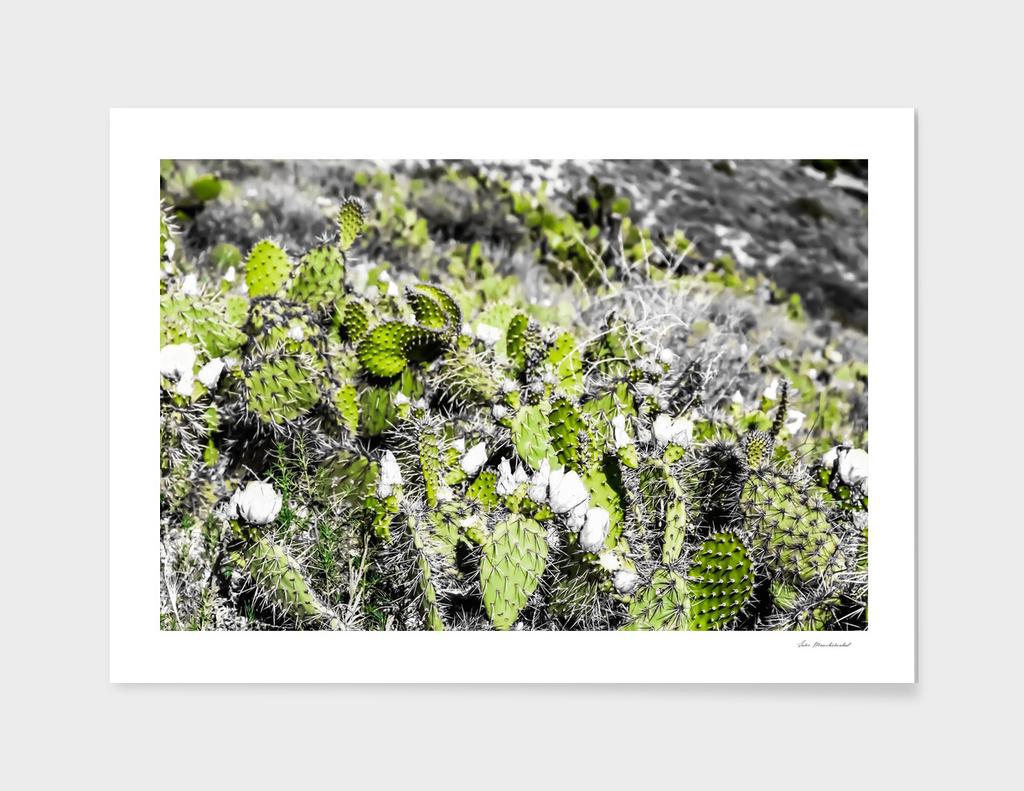 green cactus in the desert