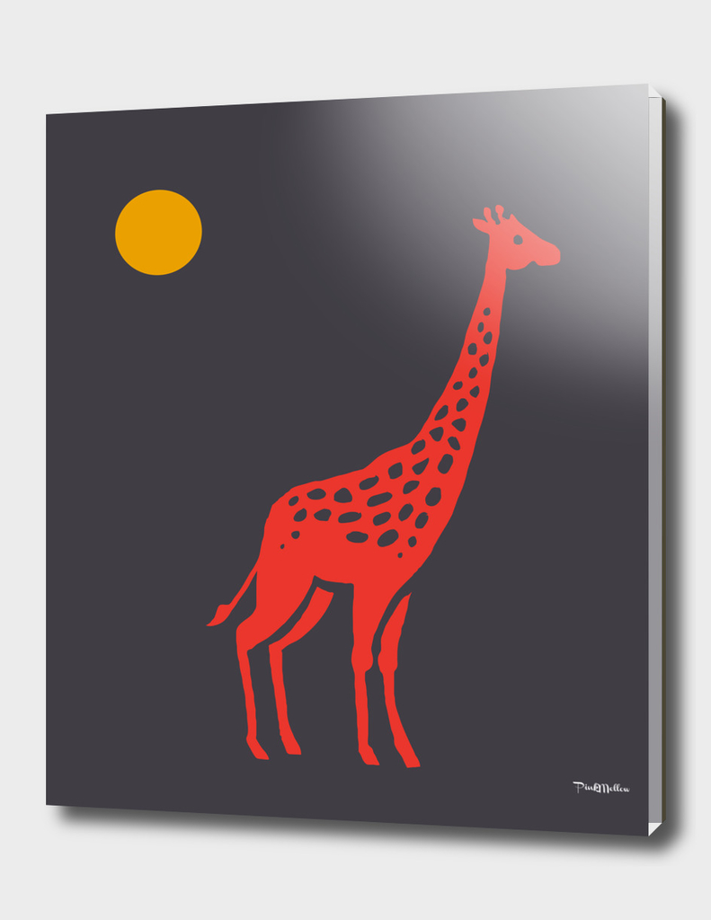 Giraffe at midnight sun