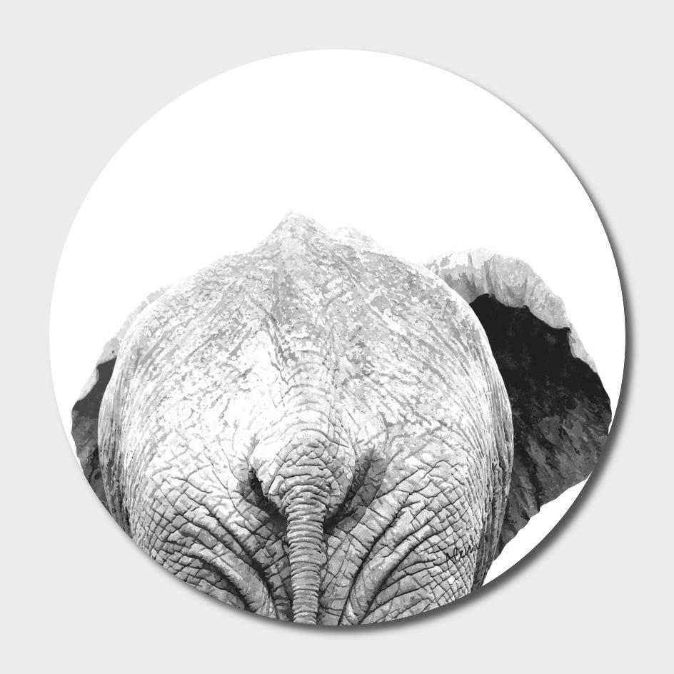 Black and White Elephant Back