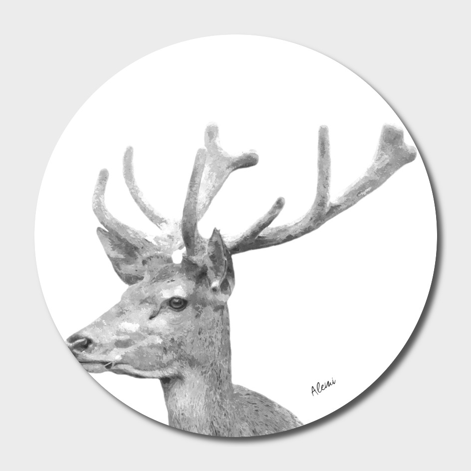 Black and White Deer Portrait