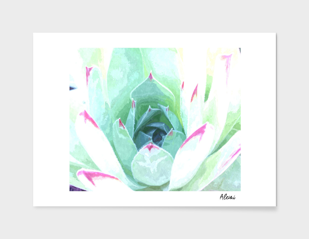 Succulent in Green and Pink