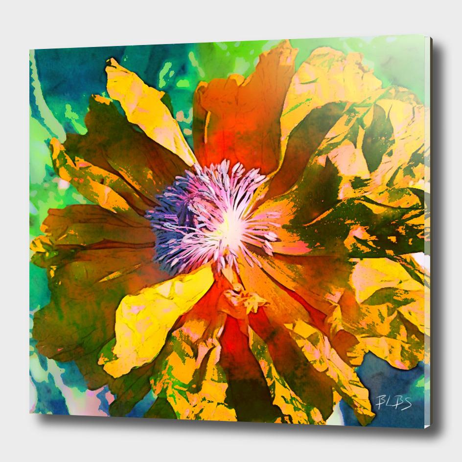 Golden - Poppy Series No. 1