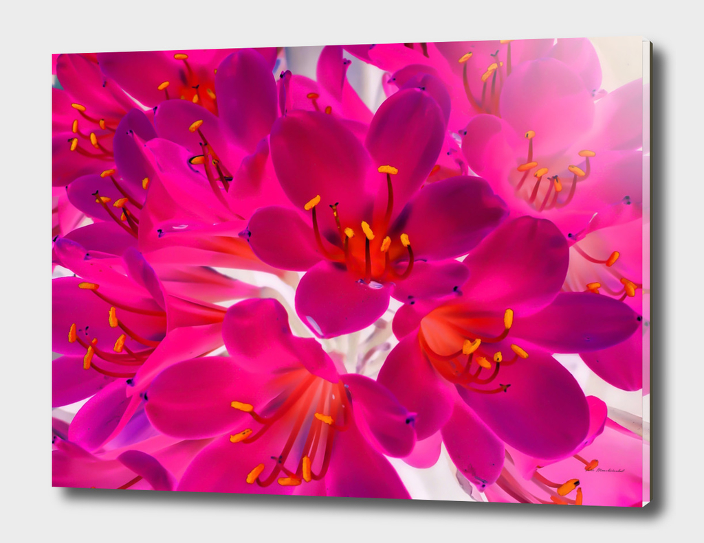 blooming pink flower pattern abstract