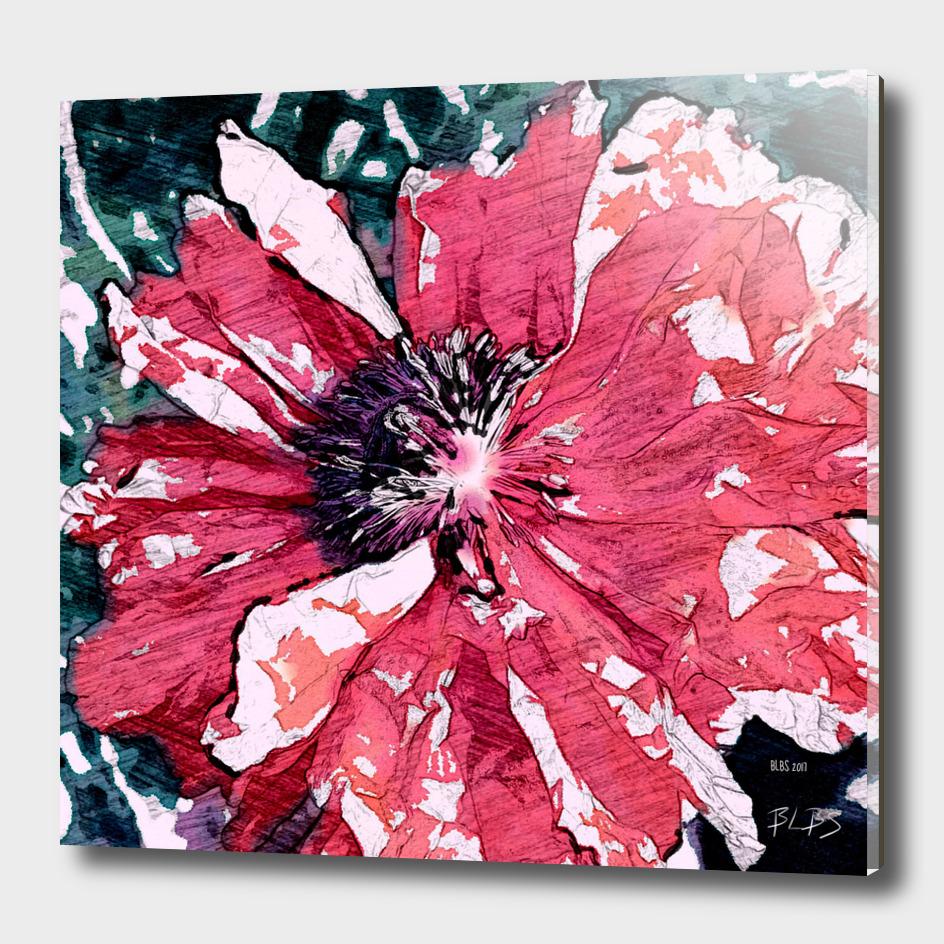 Sketch - Poppy Series No.4