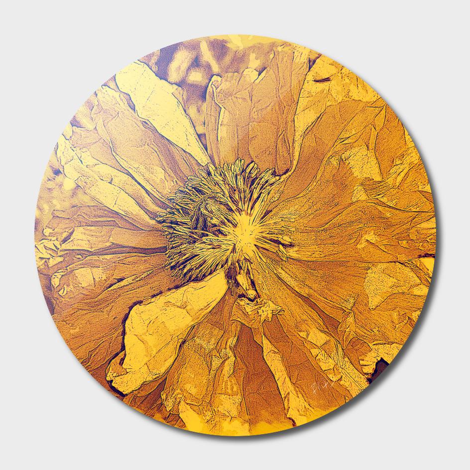 Sun - Poppy Series No.5