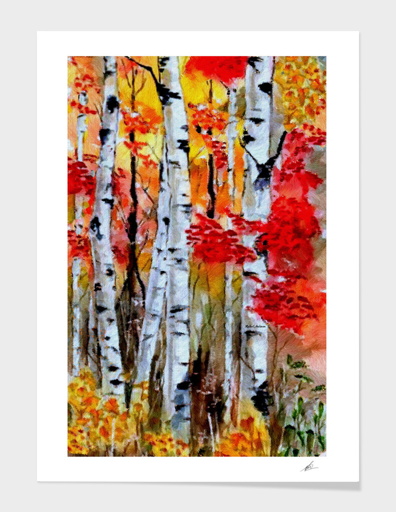 Birch Trees in Fall