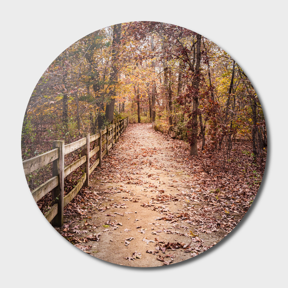 Path and Fence in the Fall Woods