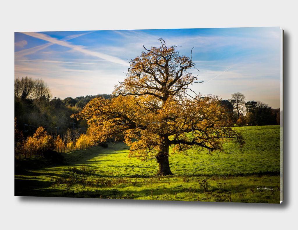 Autumnal Tree.