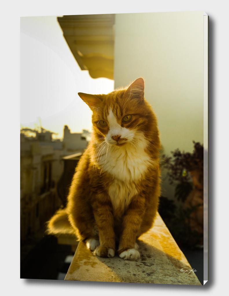 Bippy cat