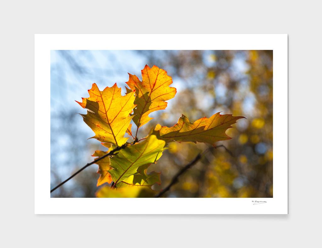 Yellow autumnleafs