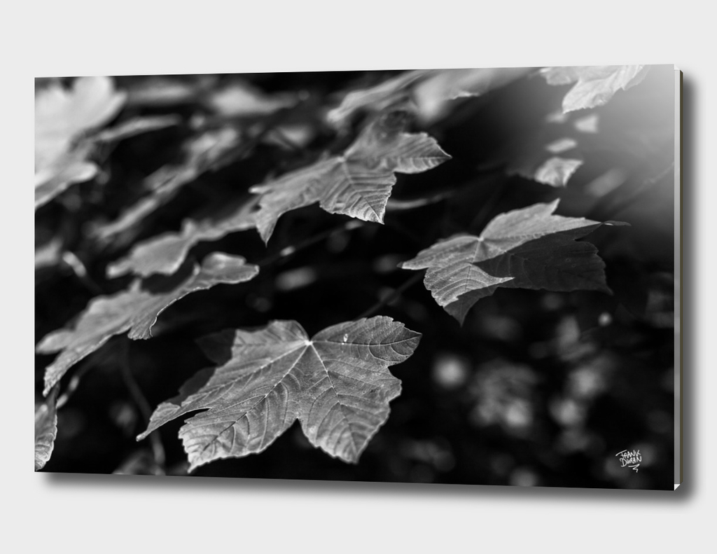Close-up leafs on a tree branch